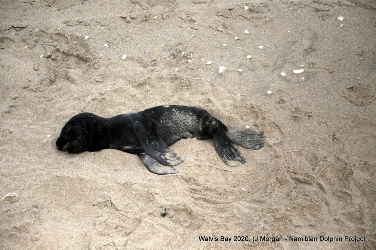 Фото Ocean Conservation Namibia / Facebook