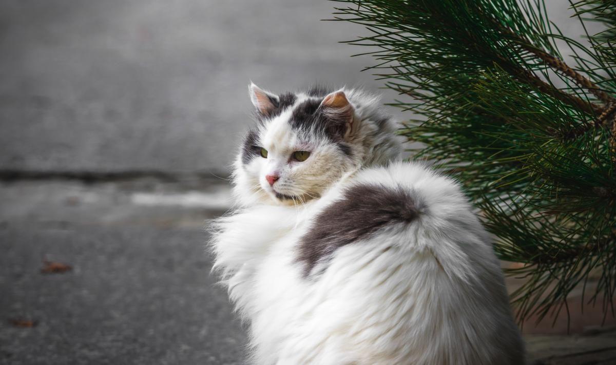 Жінка викинула кота з 10-го поверху \ Фото ua.depositphotos.com
