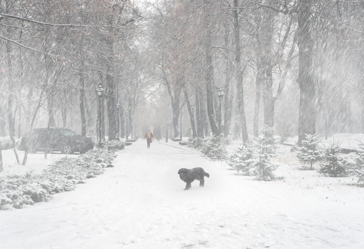Сьогодні - День прогулянки на свіжому повітрі / фото ua.depositphotos.com
