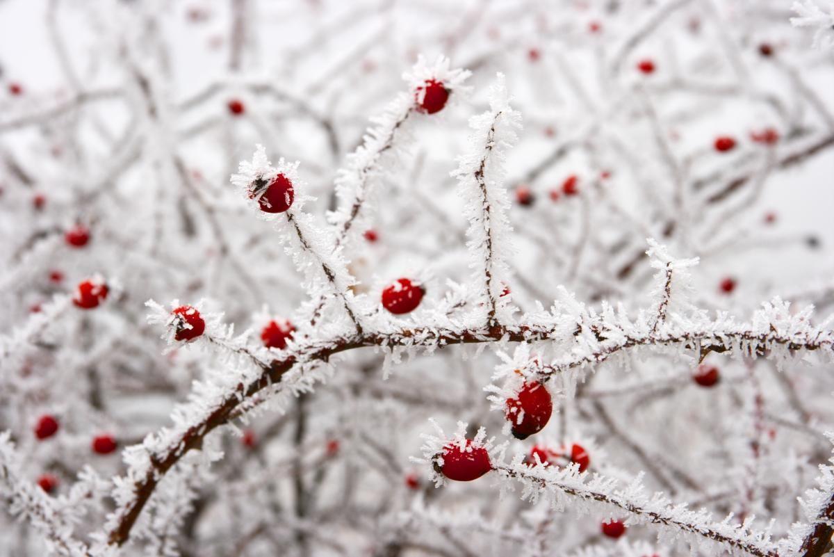 Морозы в Украине продержатся около недели / Фото ua.depositphotos.com