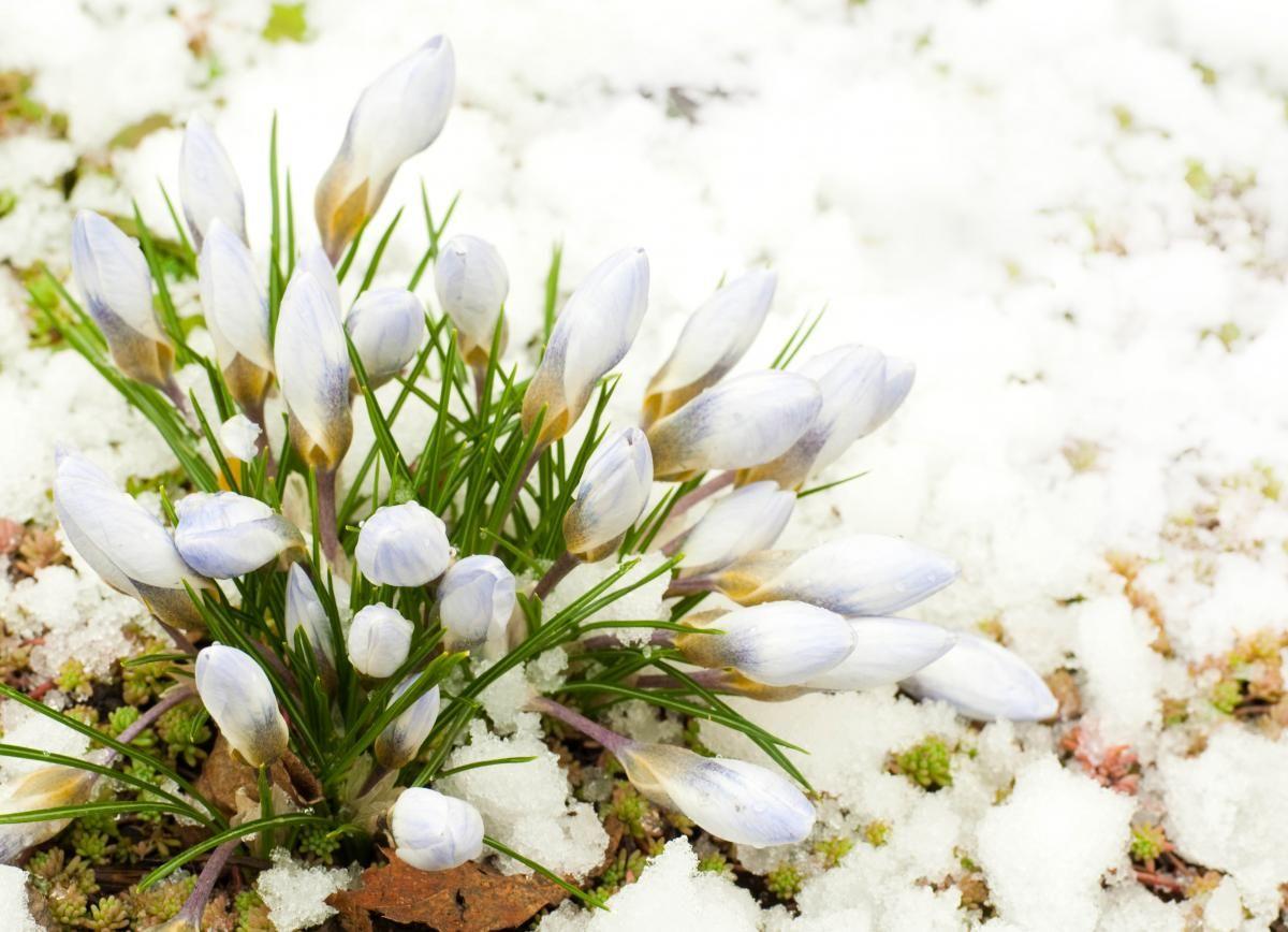 Синоптик говорит, что настоящую весну еще придется подождать / Фото ua.depositphotos.com
