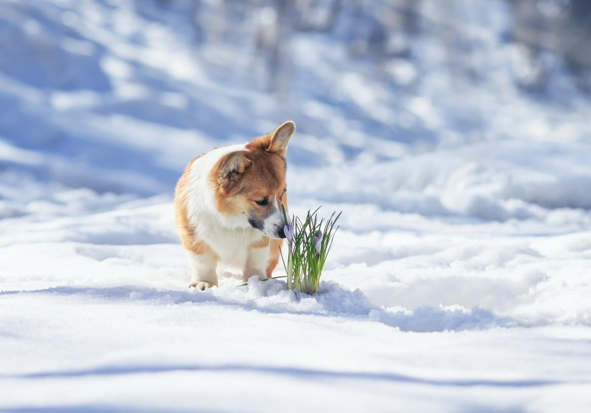 Завтра у деяких областях очікується сніг / Фото ua.depositphotos.com