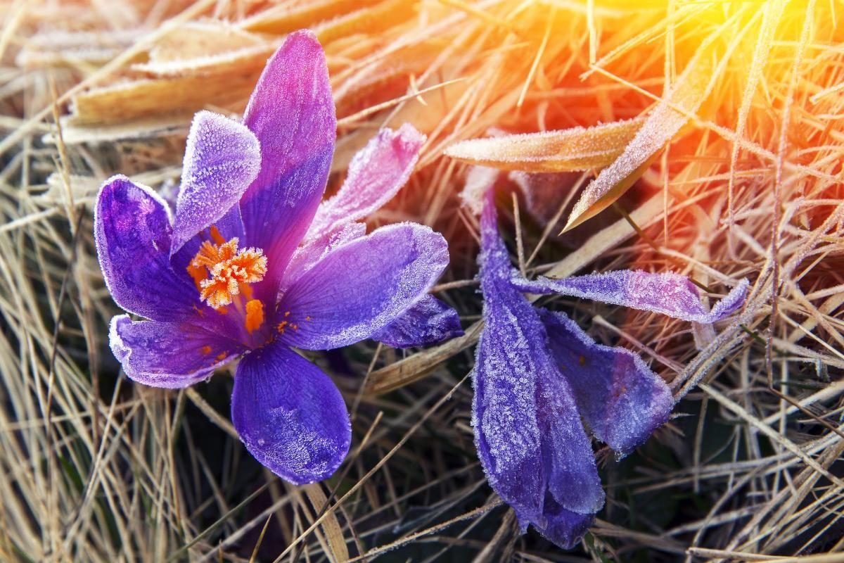 Синоптик заявила, что в Украину может прийти еще одна волна холода / Фото ua.depositphotos.com