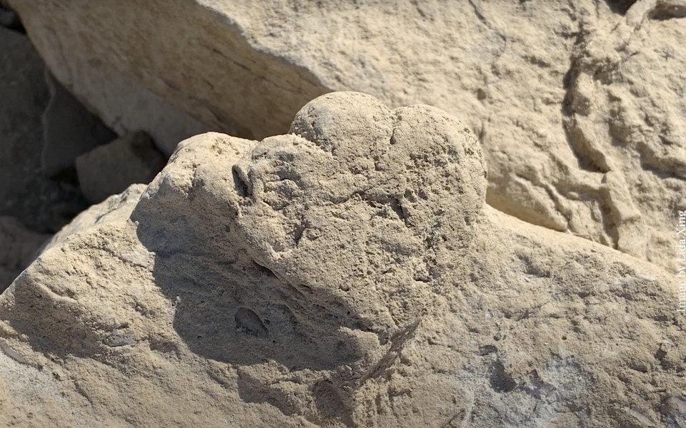 У Китаї знайшли найменший слід стегозавра / фото uq.edu.au