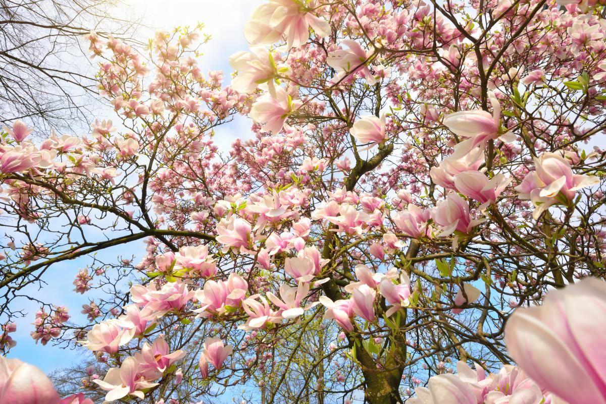 Со следующей недели в Украине установится теплая погода / Фото ua.depositphotos.com