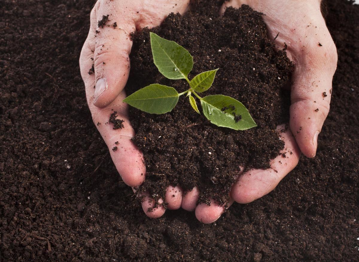 До 2024 року купувати сільськогосподарську землю можуть тільки фізособи-громадяни України / фото - ua.depositphotos.com
