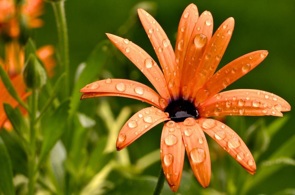 У п'ятницю, 11 червня, в Києві очікується дощ / фото ua.depositphotos.com
