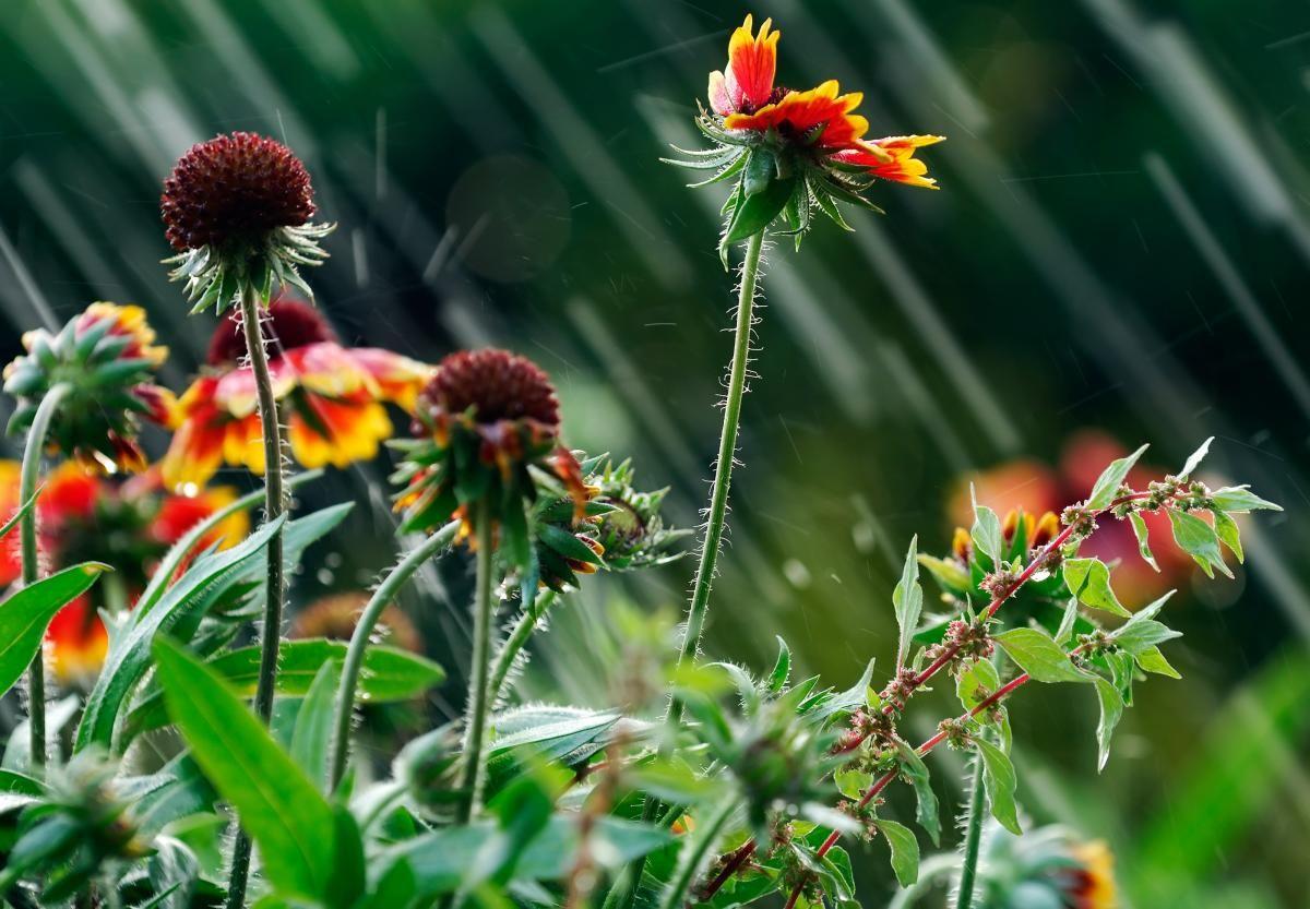 Завтра в Україні знову дощитиме / фото ua.depositphotos.com