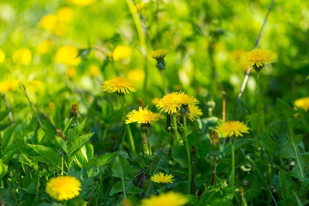 Прикмети 27 липня / фото ua.depositphotos.com