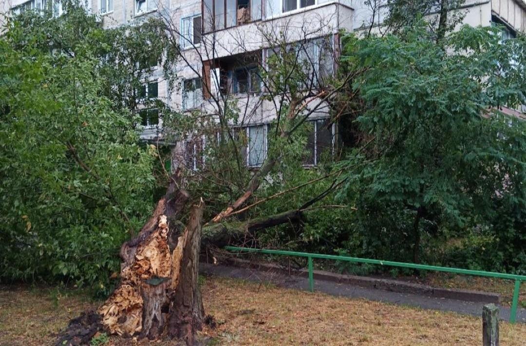 Дерево, що впало в Києві / фото - facebook.com/KyivOperativ
