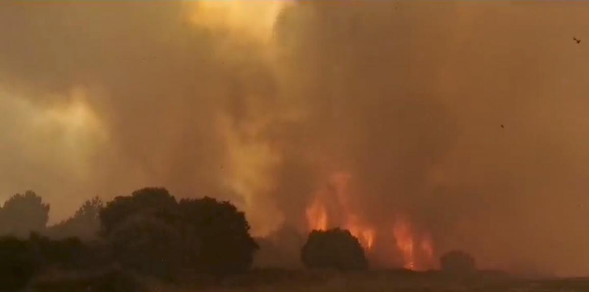 В Італії спалахнули масштабні лісові пожежі / фото REUTERS