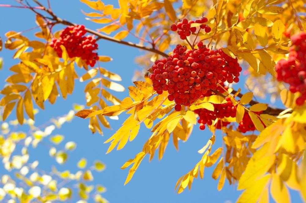 Народные приметы на сегодня / фото ua.depositphotos.com