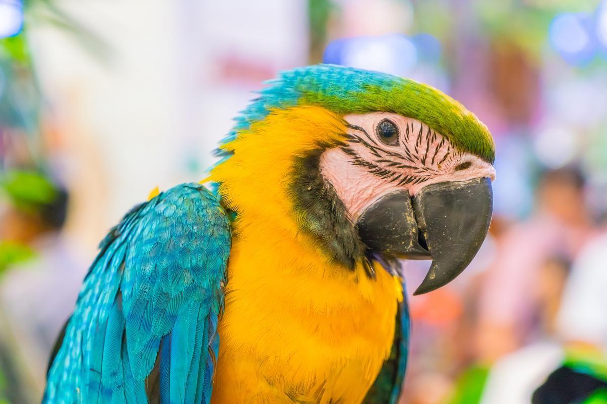 Папуга в Аргентині став свідком убивства / фото ua.depositphotos.com