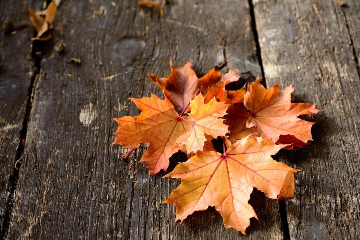 Какой праздник 22 сентября / фото pixabay.com
