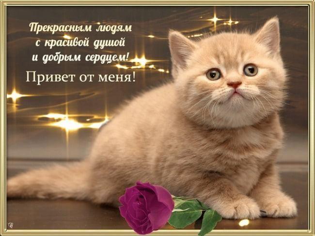 Картинки приветик / фото klike.net