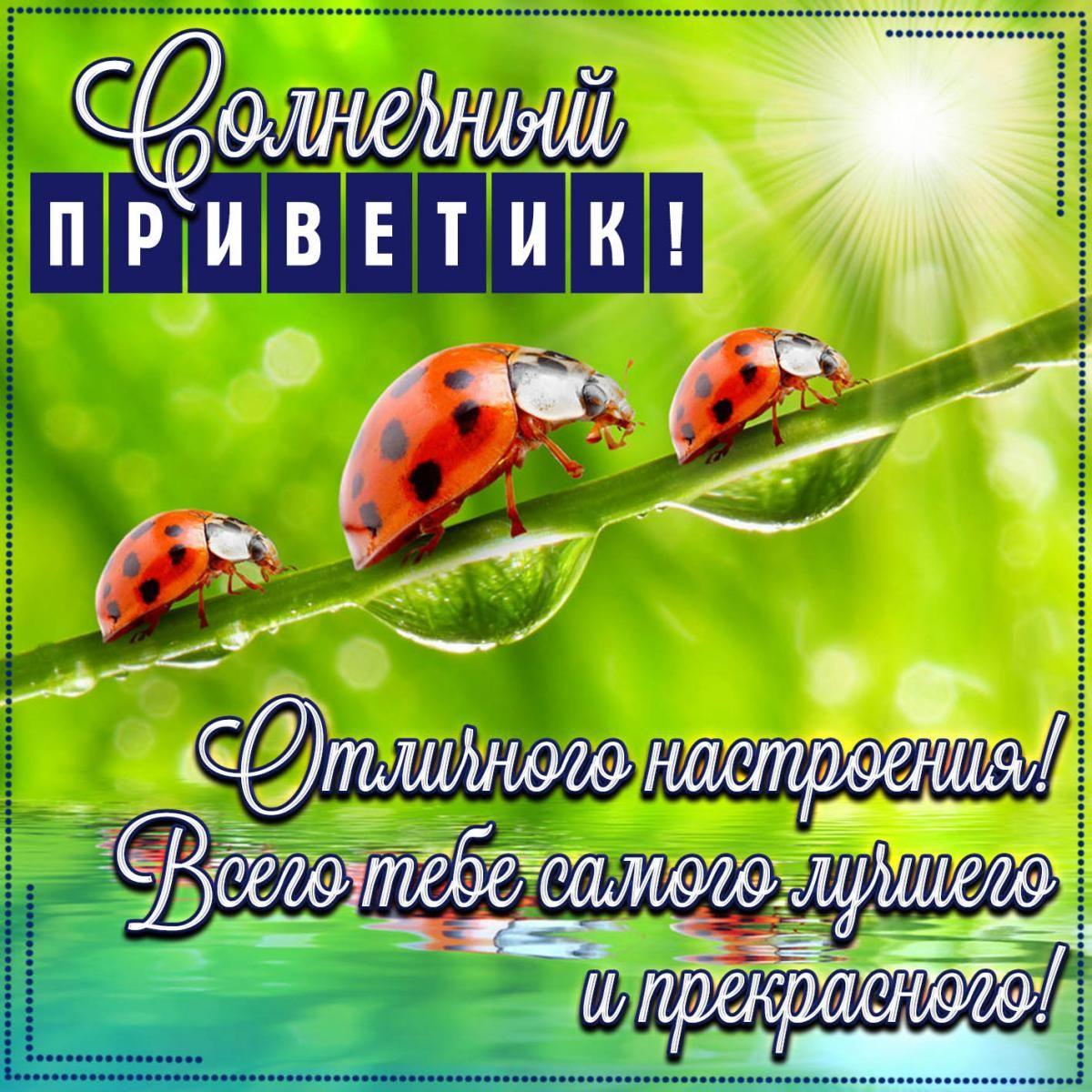 Прикольні листівки Привіт / фото fresh-cards.ru