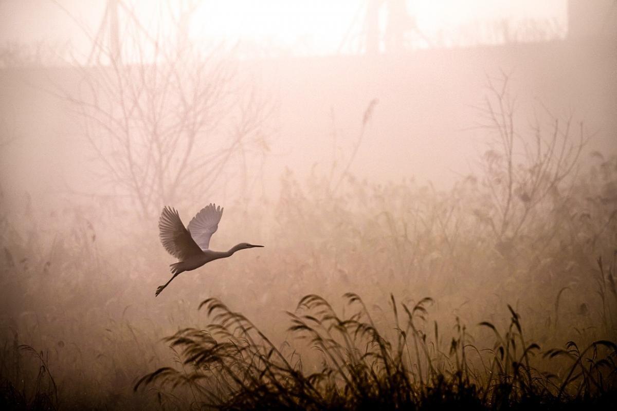 13 октября в некоторых областях Украины будет густой туман / фото pixabay.com