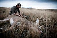 Au Texas, un Républicain veut légaliser le clonage des cerfs pour les chasser