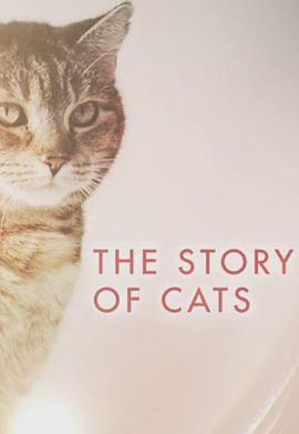 猫科动物的故事
