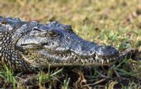 В Ялті затопило крокоділяріум