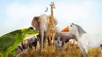 Top 10 Totally Rad Animals God Should Have Created