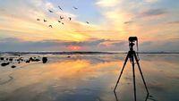 Award-Winning Nature Documentary Films Itself By Random Chance