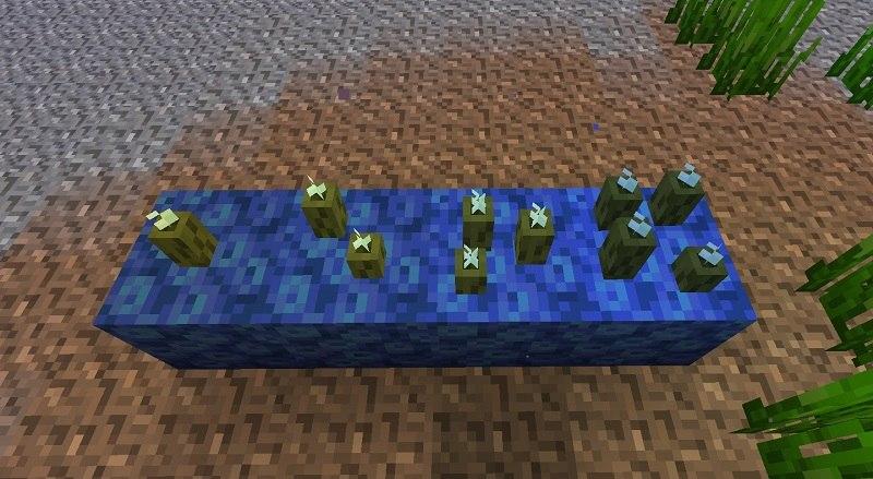 sea pickles