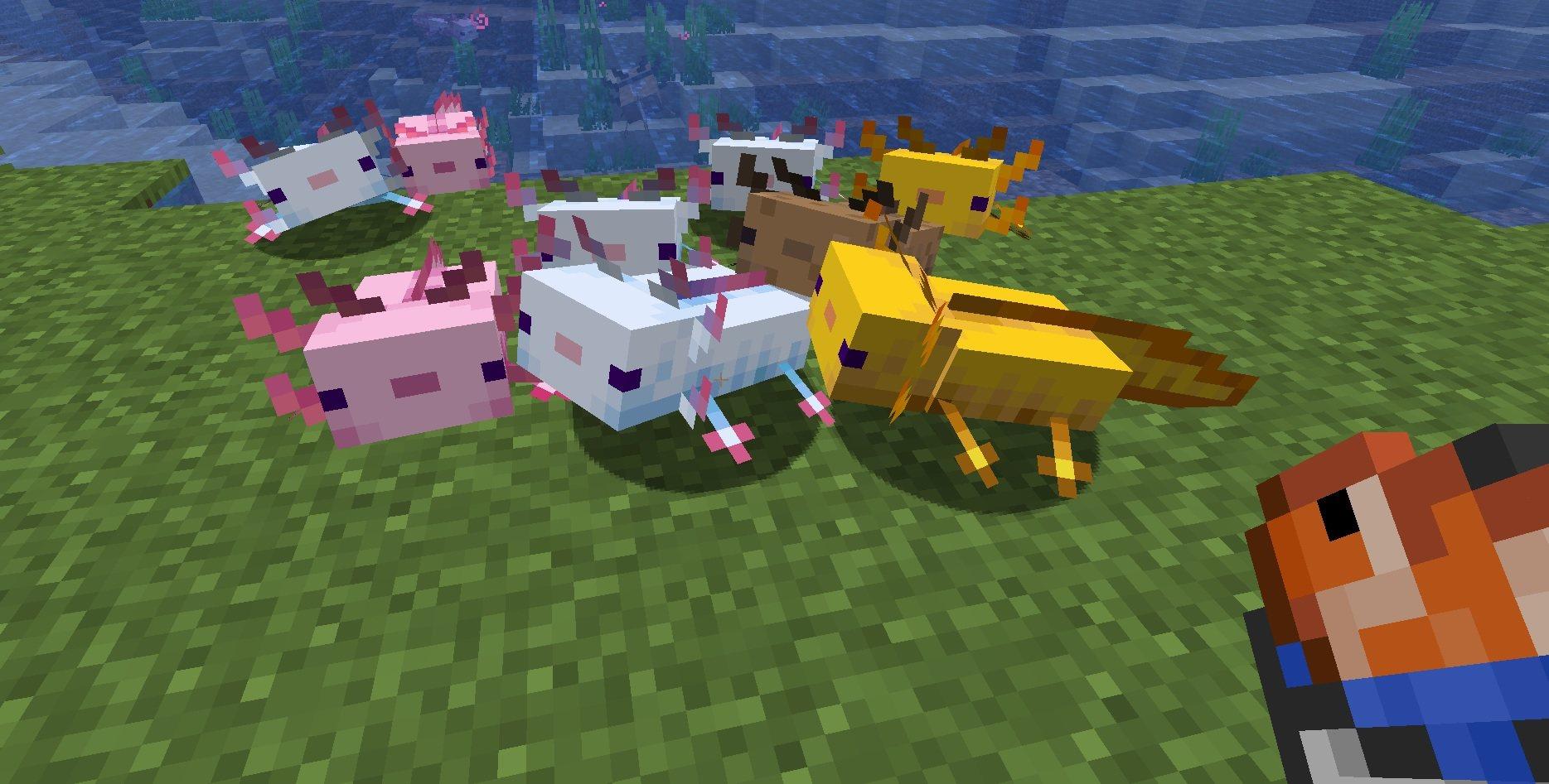 axolotl wychodzacy na lad minecraft 1.17