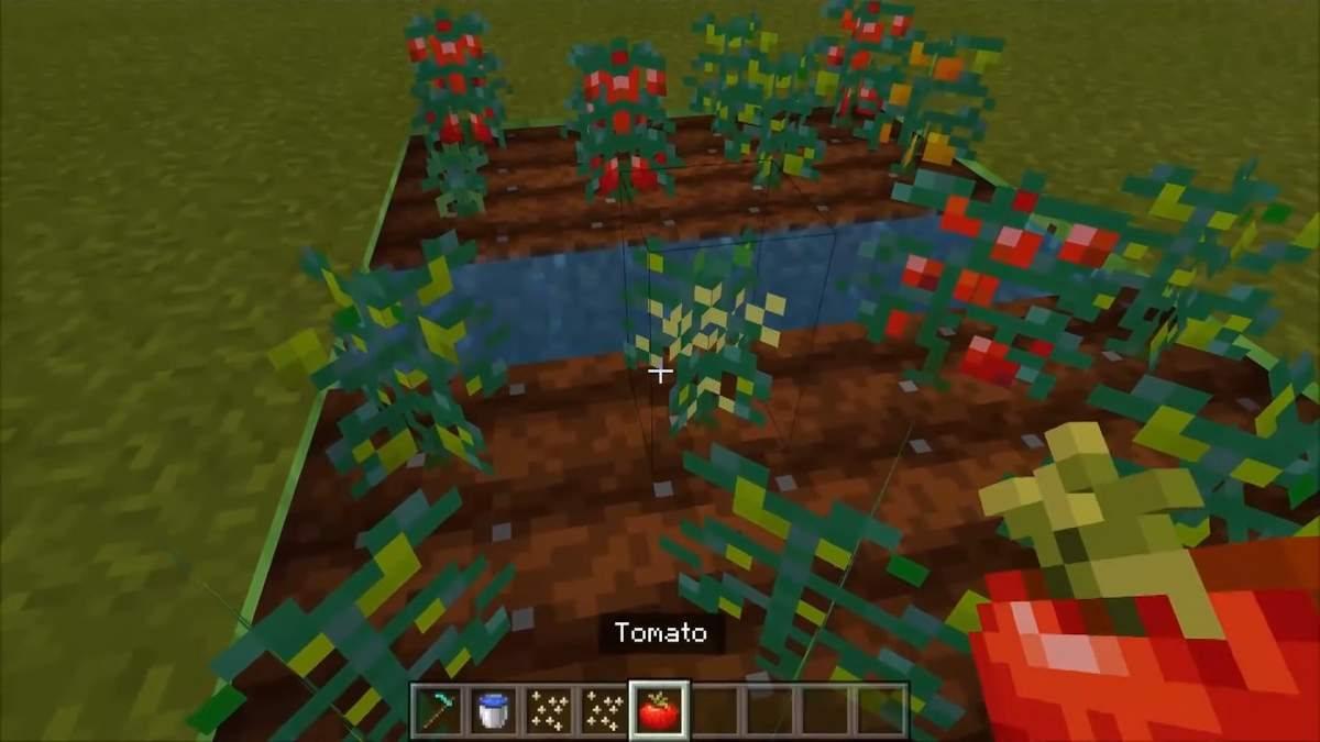minecraft bedrock pomidor