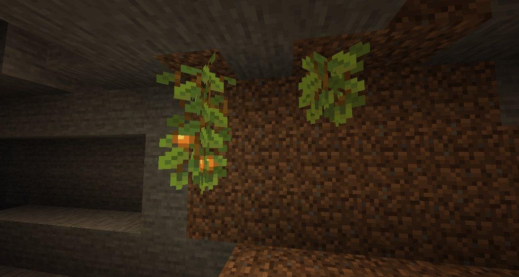 winorosle jaskiniowe ceve vines snapshot 21w05a
