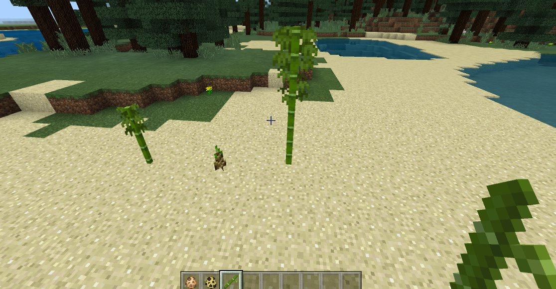 bambus 1