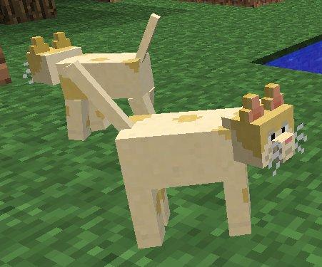 Mo-Creatures-Minecraft-koty