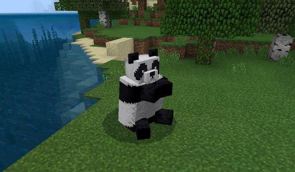 panda 10