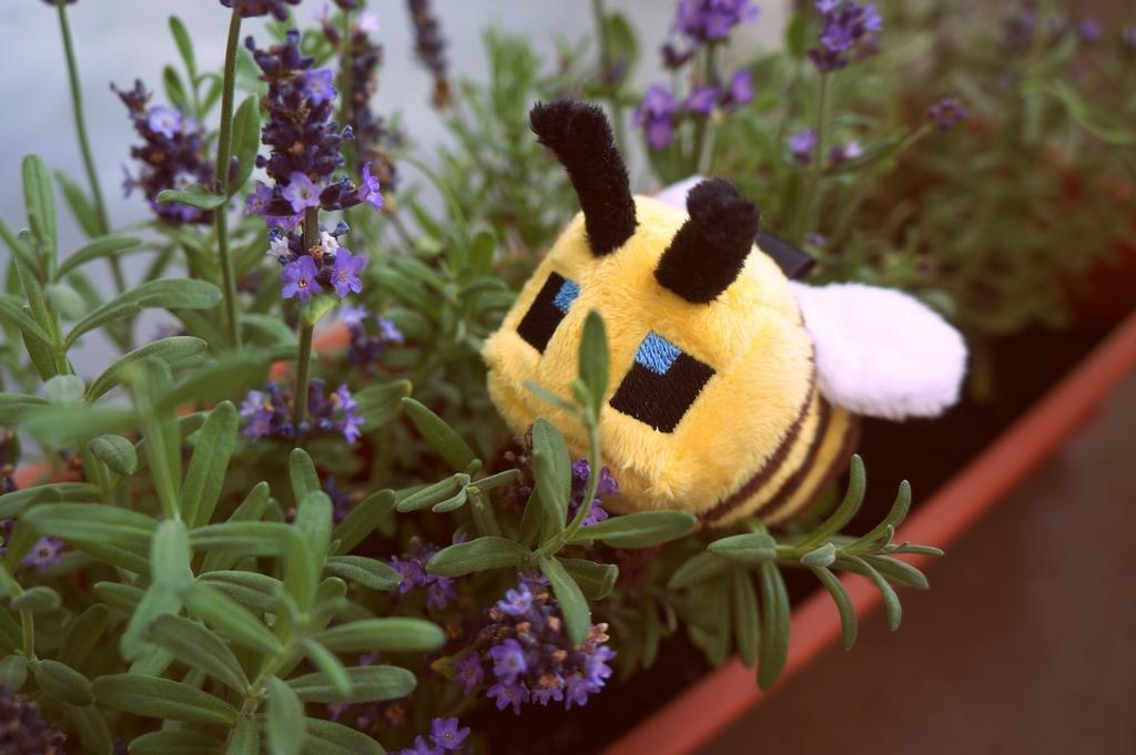 pszczoły_obrazek_003.jpg