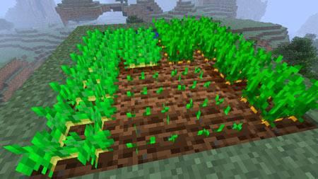 warzywa-na-polu-minecraft