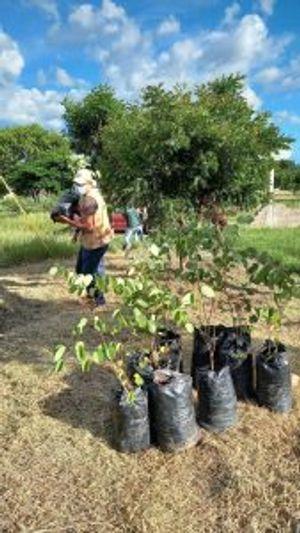 Voluntariado Ecológico (Comayagua, Honduras)