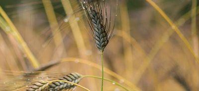 Geef je mening over nieuwe GMO's
