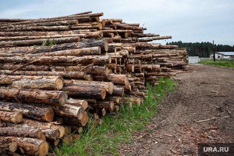 Китаю предложили восстановить вывезенный из России лес