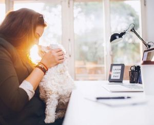 """5 Ways to Ensure a Happy Canine """"Office Mate"""""""