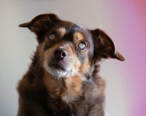 6 Tips for Caring for Dogs With Canine Cognitive Dysfunction