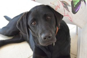 Service Dog Suffers Seizures After Ingesting Ant Poison
