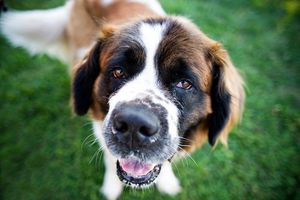 'Dog Coronavirus Found in Humans' – Why You Shouldn't Worry