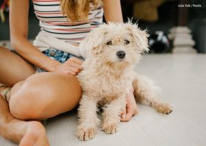 Americans Adopted Fewer Pets From Shelters in 2020