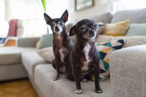 Why Does My Dog Stink? Tips for Smelly Senior Dogs