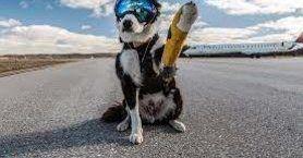 В окупованому Сімферополі бродячі собаки не давали приземлитися літаку з Москви