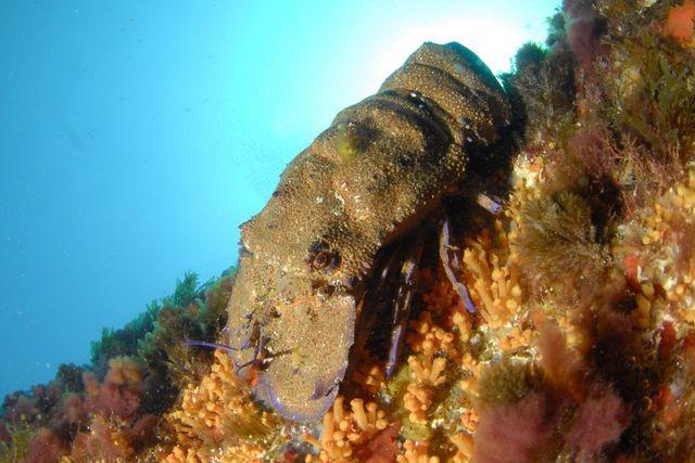 Une plongée à la pointe du vaisseau à Port-Cros