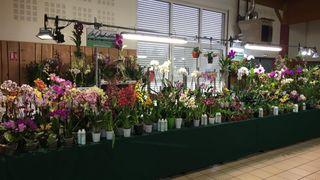 A la découverte du monde magique des orchidées