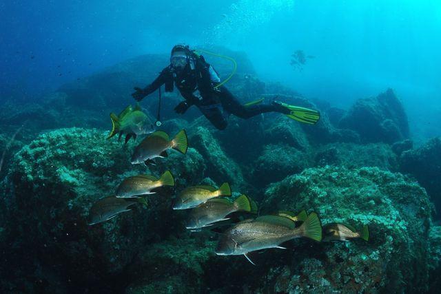 Plongée à la Pointe de la Croix à Port Cros