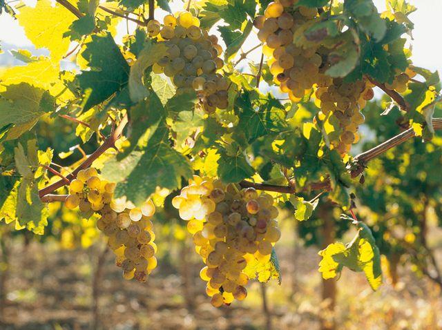 Maison des Vins Coteaux Varois en Provence - La Celle
