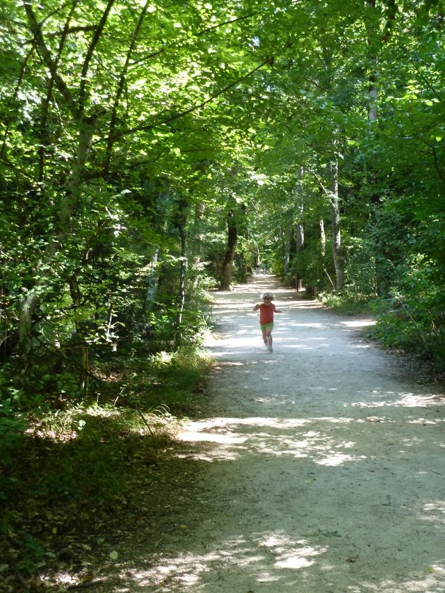 Forêt de la Sainte-Baume